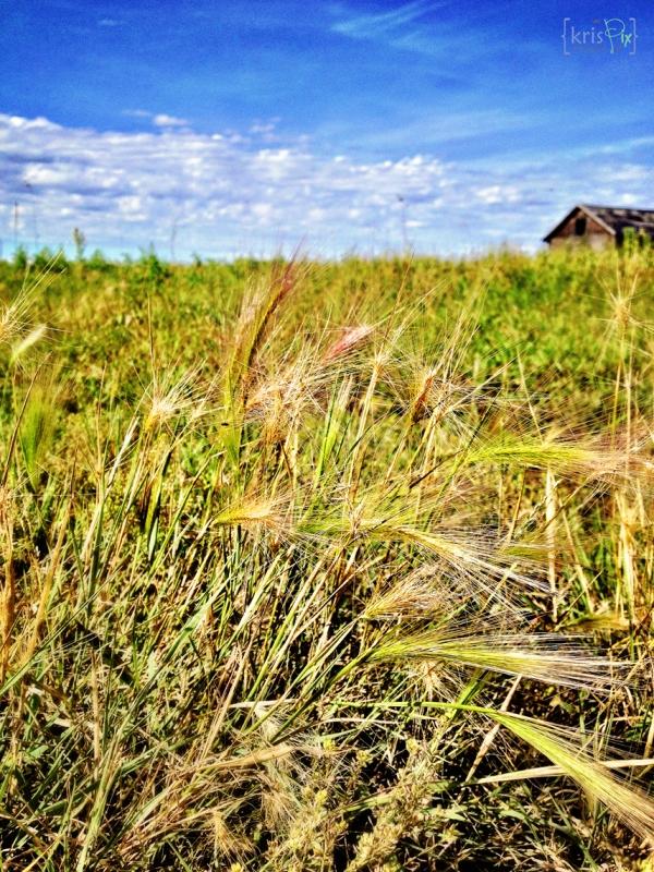 at-the-farm-prairies