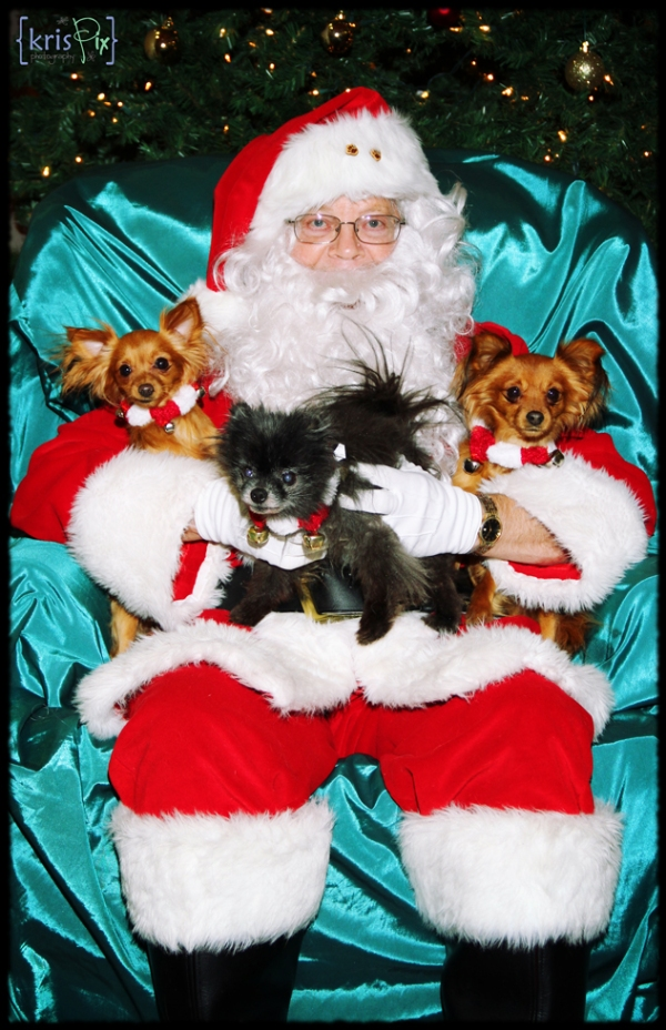 pet-pics-with-santa-2013-3