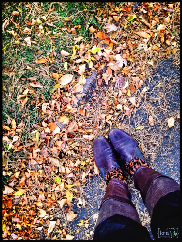fall-colours