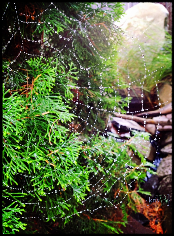 raindrops-and-spiderwebs