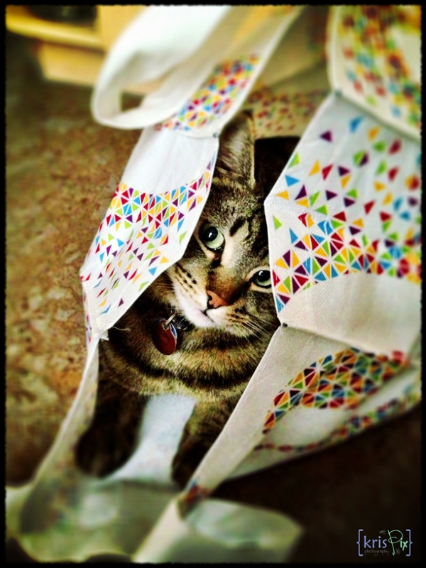 cat-in-a-bag